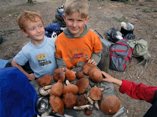 Шебордаевские грибы. Новый сорт :)