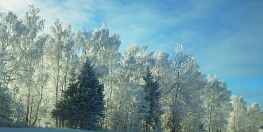 Серебряный предновогодний лес